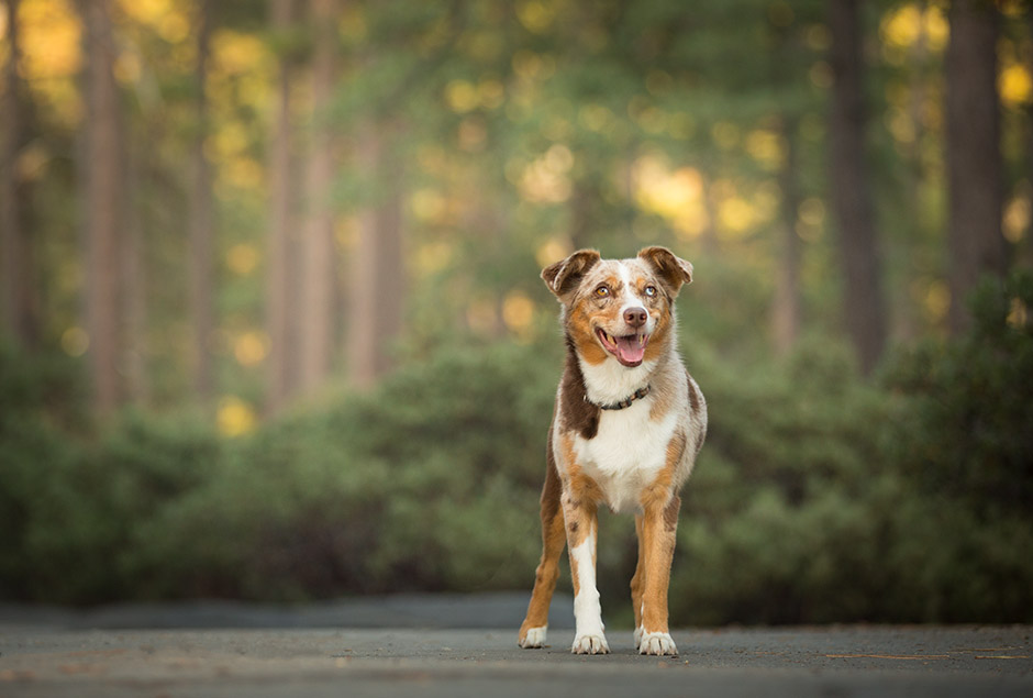 dog photography fallbrook