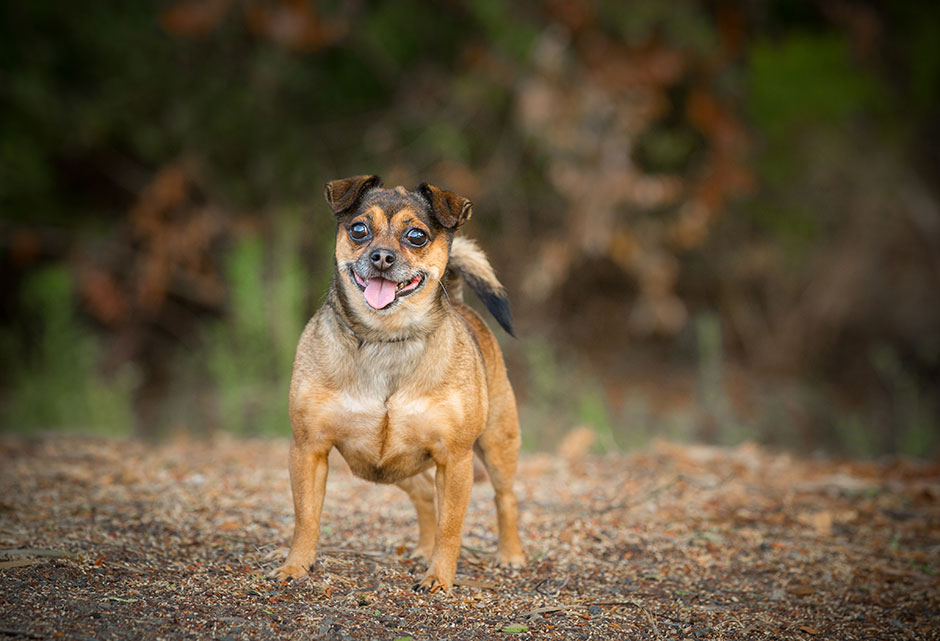 pet photography mixed breed