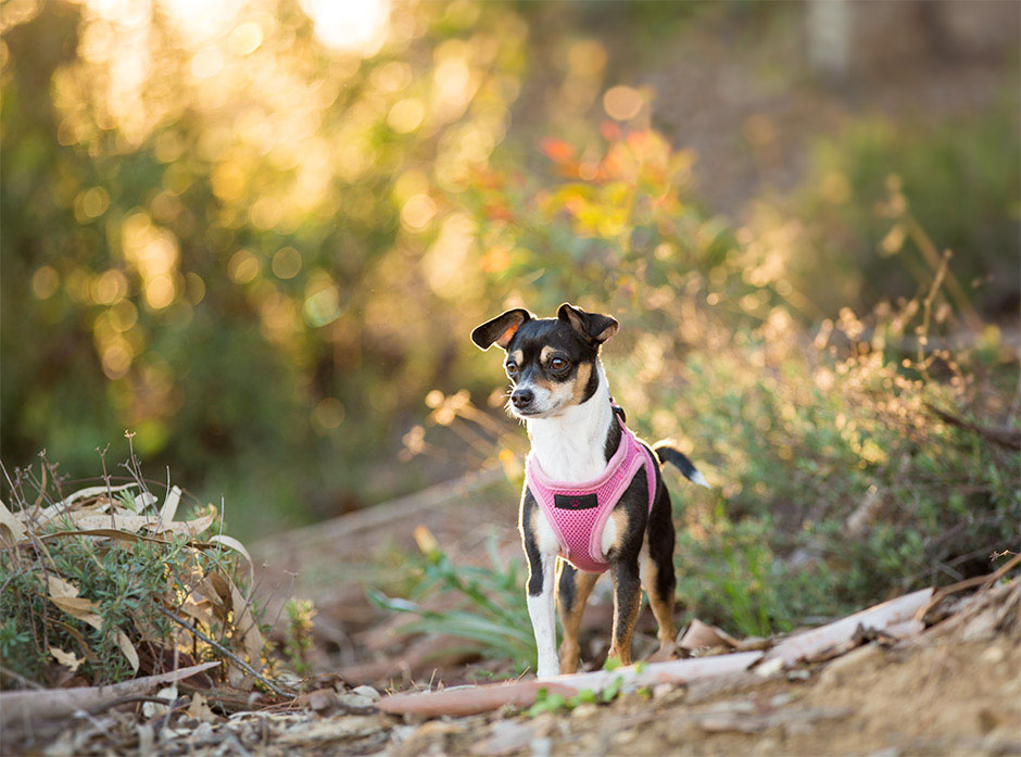 pet photograpy ontario ca