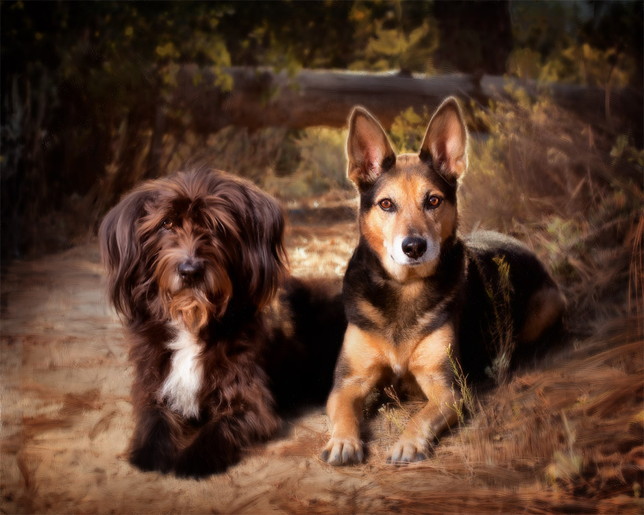 shepard pet photography in redlands