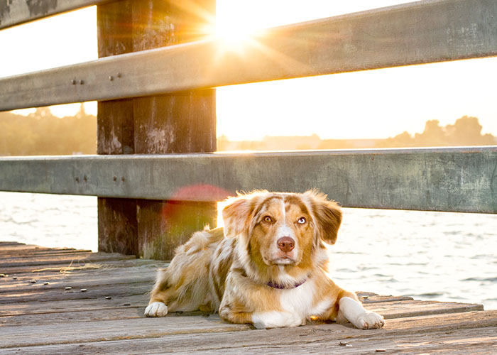 pet photography san dimas